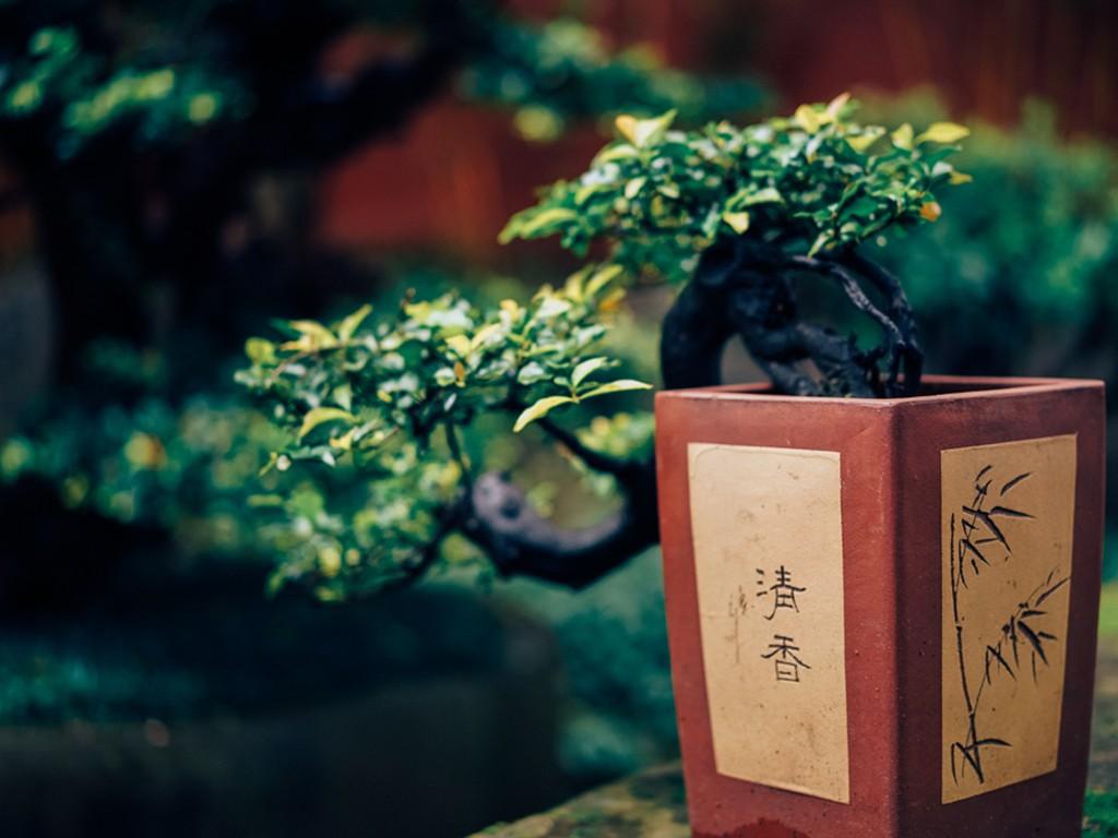 五大室内植物,助你拥有健康呼吸环境