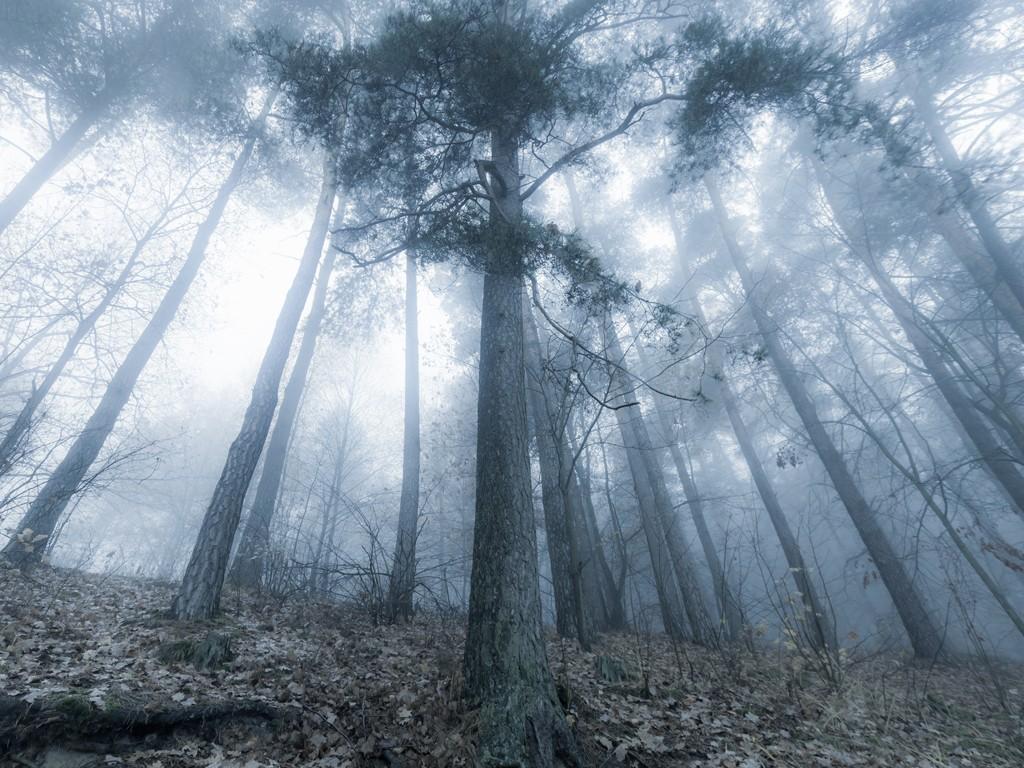 有利于辐射雾形成的天气条件